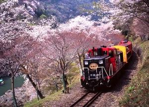 嵐山のトロッコ列車!桜の季節はココがオススメ!